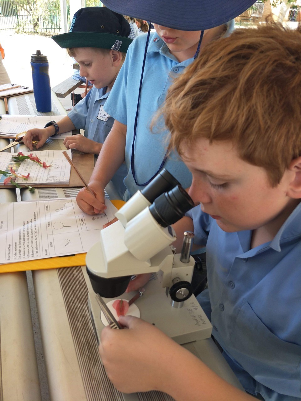 Student's looking at specimens under the microscope in the Secret life of plants program.