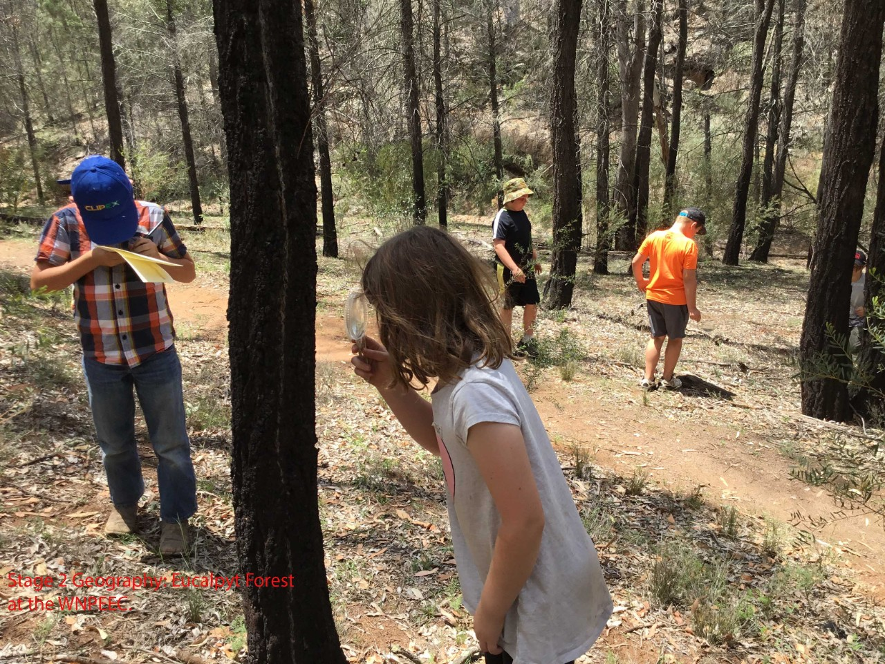 Students exploring the bush land in one of our Primary programs